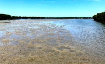 low tide, saltwater, beach combing,