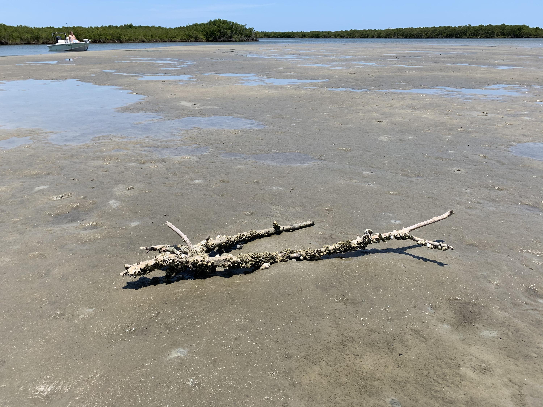 driftwood island low tide beach barnacle-covered tide pools