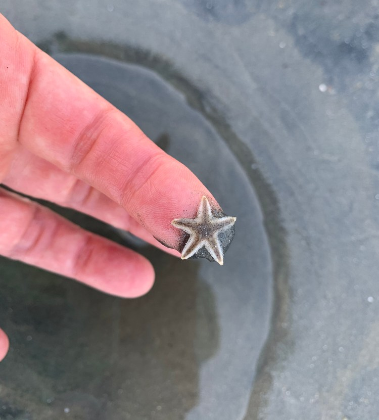 tiny sea star, starfish,