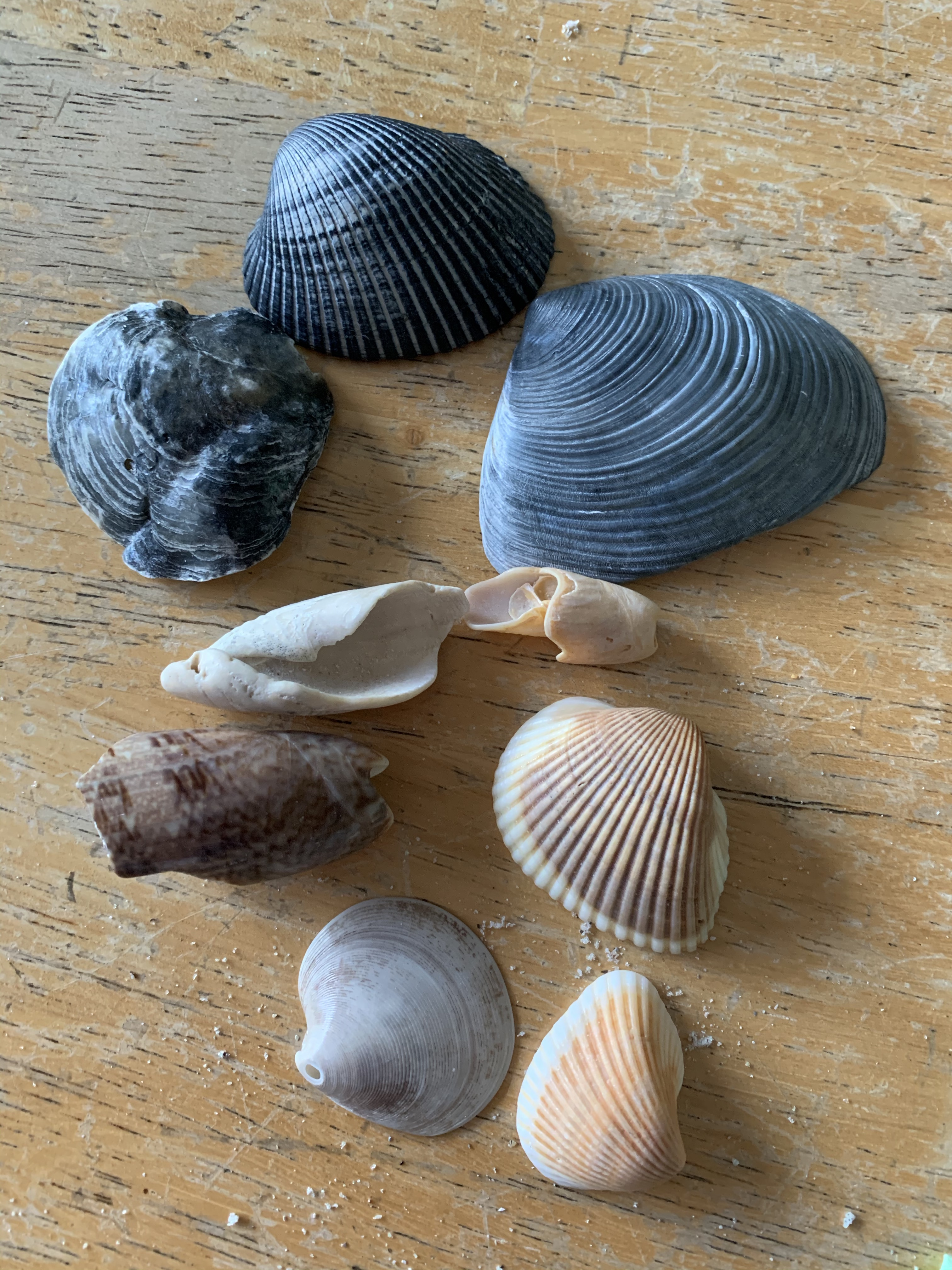 Looking For Shells That Are Out Of The Ordinary