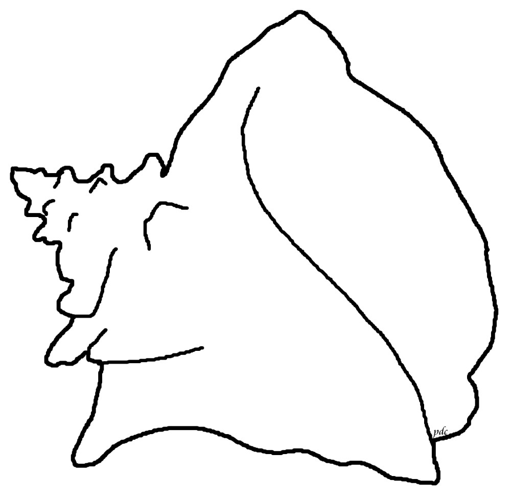 Queen -or Pink- Conch Coloring Page (2/2)