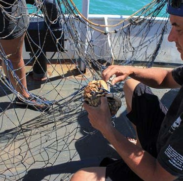 field-160502-1-3-Corey-Dahlquist-160320-CB-Nolan-Corey-saving-crab-from-totoaba-net-550w
