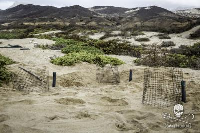 editorial-140911-1-5-140823-sa-001-control-nests-near-basecamp-2784-400w.jpg