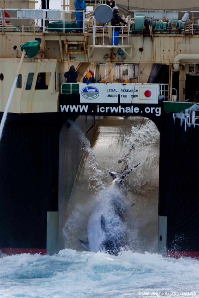 Photo Credit: Sea Shepherd