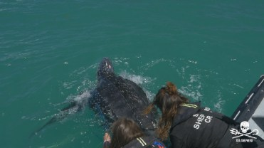 180422_Sea_Shepherd_Leatherback_turtle_rescue_4