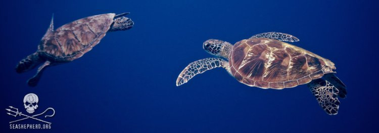 jairo-fl-turtles-550w