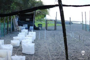 A hatchery on Pacuare Beach protects sea turtle eggs from poachers, giving hatchlings a fighting chance at survival Photo: Sea Shepherd