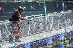 news-170815-1-4-170809-SA-Chief-George-Jr-inspects-the-fish-pens-at-depth-using-a-GoPro-on-a-fishing-rod-017-1484-1200w