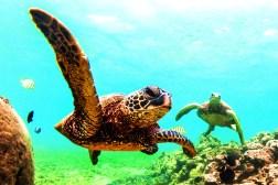 jairo-turtle-header