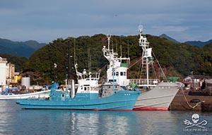 editorial-131223-1-1-Coastal-whaling-ships-in-Taiji-Japan-300w
