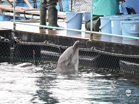 Sea Shepherd's Cove Guardians will continue to monitor the hunt in Taiji Photo: Sea Shepherd