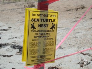 editorial-150701-1-fl-sea-turtle-nest-280w