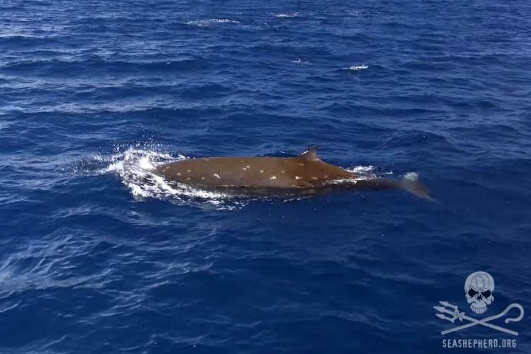news-171218-1-3-beaked-whale-1000w.jpg