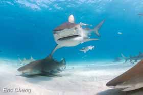 editorial_120525_1_1_sharks_echeng071117_0146775