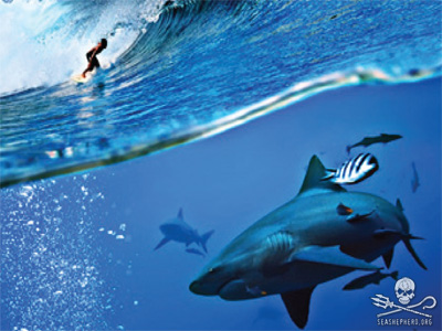 editorial-130726-1-1-shark-image