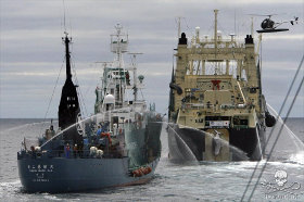 editorial-150623-1-nm-right-hauls-a-newly-caught-minke-whale-up-its-slipway-280w