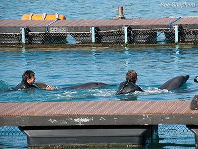 editorial-121205-1-3-bottlenose-and-trainers-3