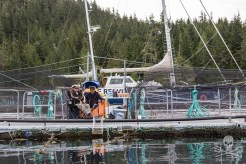 news-170824-1-3-SA-Members-of-the-Namgis-and-Mama-Lili-Kala-nations-Ernest-Alfred-and-Karissa-Glendale-begin-the-occupation-of-Swanson-Island-fish-farm-003-3452-1200w