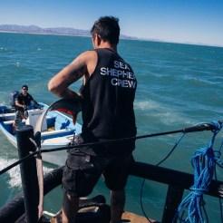 news-170219-1-7-GB-170218-Ian-releasing-a-threshers-shark--45A2467