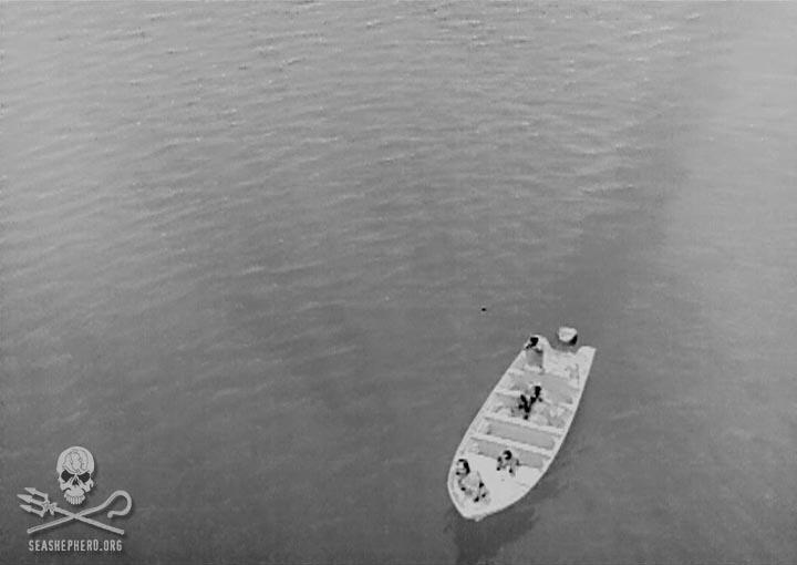 news-171226-1-1-141224-poachers-shooting-at-sea-shepherd-night-drone-frame-capture (1).jpg