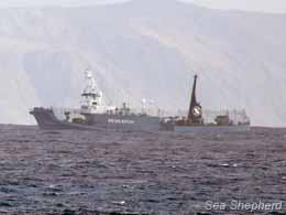 The Yushin Maru No. 3 waits near Macquarie Island in hopes of finding the Bob Barker. Photo: Carolina A. Castro