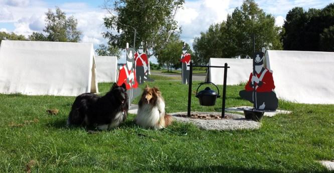 Beckett and Keltic enjoying St. Lawrence, Canada