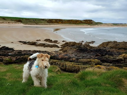 9. Bertie enhancing Cruden Bay in Scotland