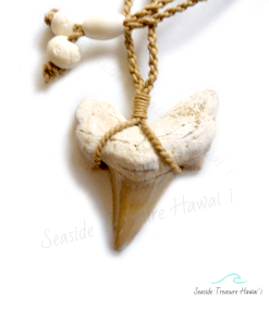 morrocan shark tooth necklace