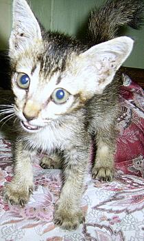 Kucing Kampung Catatan Semusim