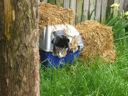 mylar cat house