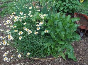 wagon wheel herbs
