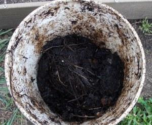 5 gallon compost bucket at 4 weeks.