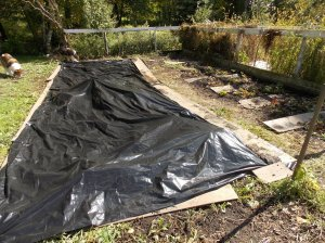 Moving the strawberries and tarping for winter.
