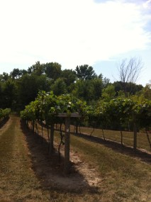Winehaven Vineyards2