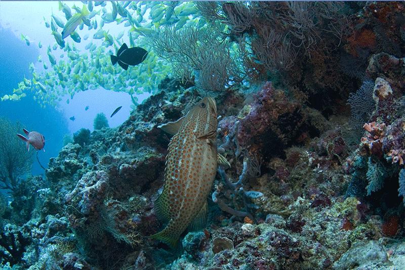 Diving-01WEB
