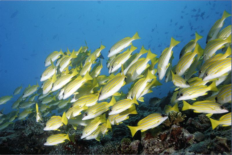 Diving-02WEB