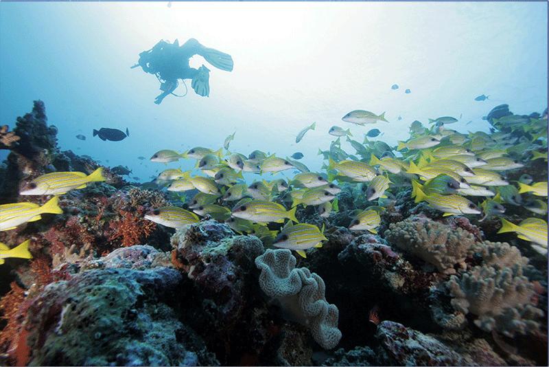 Diving-07WEB