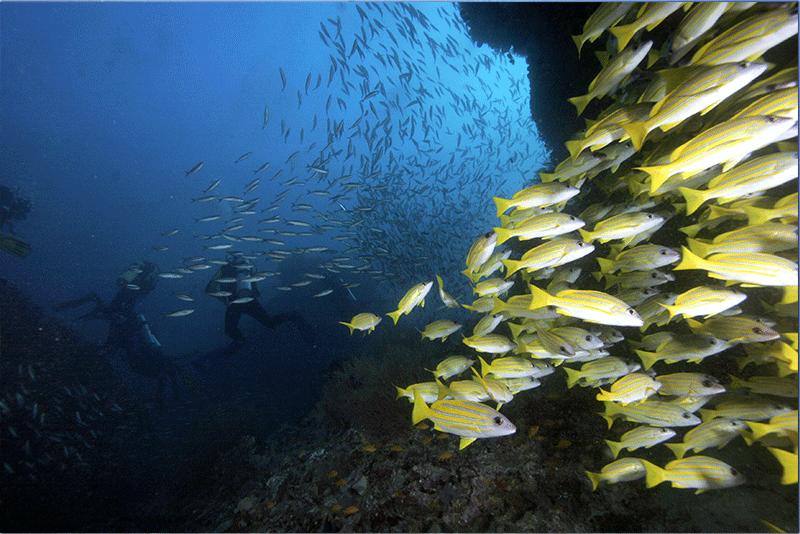 Diving-08WEB