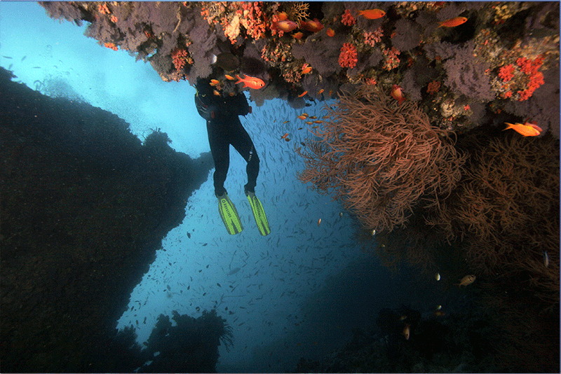 Diving-11WEB