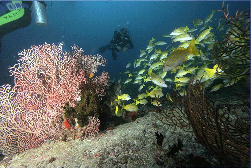 Diving-12WEB
