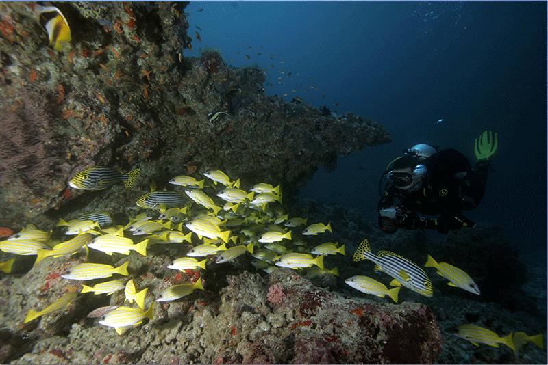 Diving-13WEB