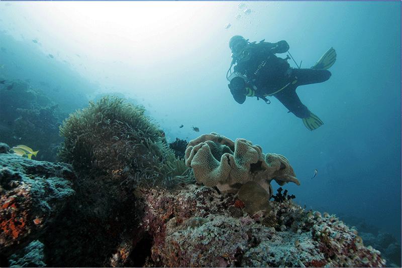 Diving-14WEB
