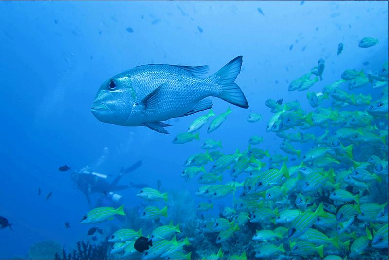 Diving-18WEB