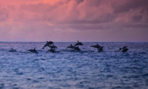 Dolphin watching in tropics