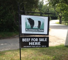 """Aldermore Farms is a great place to see the Belted Galloways. Nicknamed the """"Oreo Cookie"""" cows. Rockport Maine"""