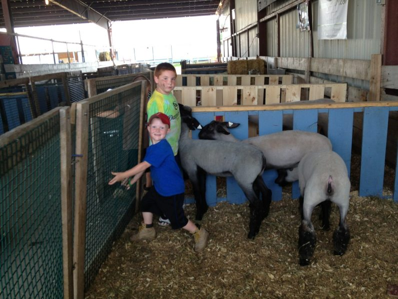 Kids and the Sheep