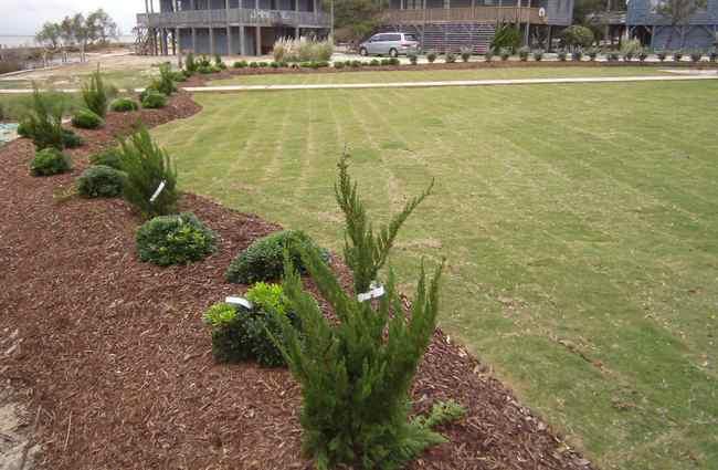 landscape installation Stage 4: Finished rear yard