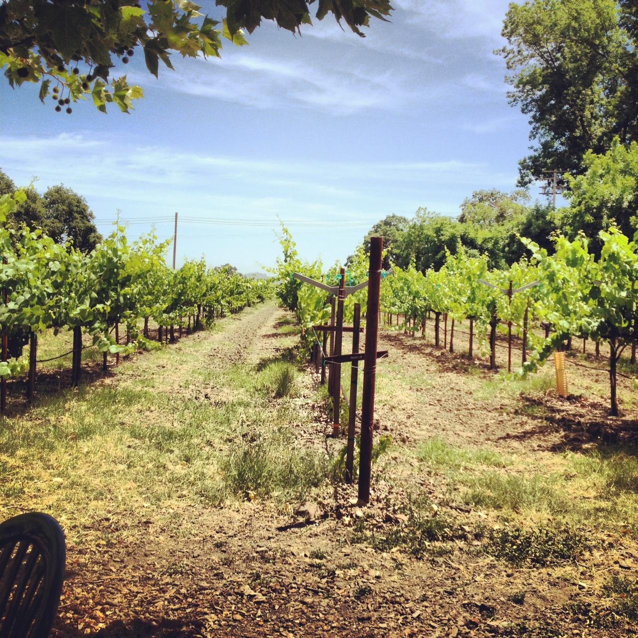 Caymus Vineyards Seasons Of Wine