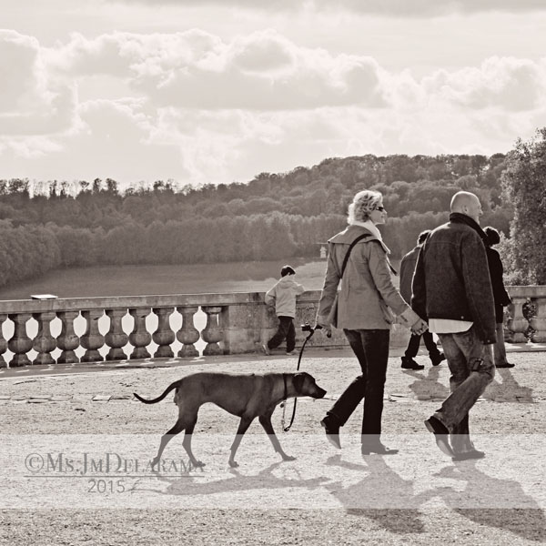 dog lovers france versailles walking dog