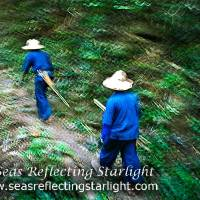Weekly Photo Challenge: Movement - Trekking Through the Thai Jungle